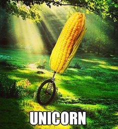 A wild unicorn appears…