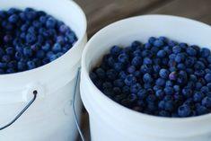 Φρούτα και λαχανικά: τι σημαίνουν τα χρώματα;   Θέματα   Bostanistas.gr : Ιστορίες για να τρεφόμαστε διαφορετικά Summer Berries, Blueberry, Remedies, Herbs, Fruit, Eat, Healthy, Gardens, Food