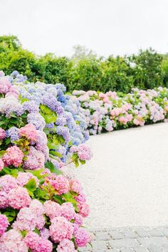White Flowers, Beautiful Flowers, Exotic Flowers, Yellow Roses, Purple Flowers, Pink Roses, Hydrangea Season, Hydrangea Garden, Hydrangeas