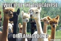 Llama Buddhism ☸️ or Alpaca Wisdom ☸️ Funny Llama, Funny Animal Memes, Cute Funny Animals, Llama Llama, Llama Puns, Alpaca Funny, Alpacas, Funny Images, Funny Pictures