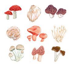 """A Collection: Mushrooms"", acrylic gouache on paper A Collection is a year-long series of small gridded paintings updated bimonthly. If you'd like to see the progress so far, take a look."
