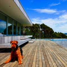 This Holiday Home has a perfect backyard for this dog to run. Large Dogs, Deck, Backyard, Building, Outdoor Decor, Holiday, House, Home Decor, Big Dogs
