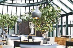 Clementine, Palais Coburg, Vienna