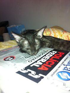 Fiona... dormiu...