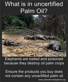Palm oil-- We are all in this together-- say no to cruel practices that yield unhealthy crops. Let's stick together!