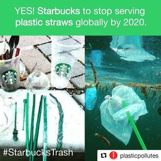 #Repost @plasticpollutes (@get_repost)TODAY coffee giant @Starbucks announced a phase out of plastic straws globally in its stores by 2020. . The announcement came after months of pressure by more than 20 environmental organizations asking Starbucks to stop polluting the planet with single-use plastic. .  Read more using the link in bio  @NoPlasticStraws . #StarbucksTrash #breakfreefromplastic #NoPlasticStraws #NotSoGreenStraws #plasticpollution #oceans #skipdisposableplastic…