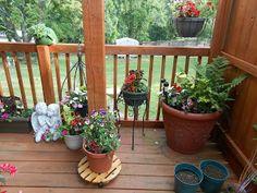The Northern West Virginia Gardener: A gardener carries on.....