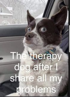 """Therapy Sh*posts For People With Issues Memes) - Funny memes that """"GET IT"""" and want you to too. Get the latest funniest memes and keep up what is going on in the meme-o-sphere. Funny Animal Pictures, Cute Funny Animals, Funny Images, Funny Photos, Best Funny Pictures, Funny Dogs, Cool Pictures, Funniest Photos, Animal Pics"""