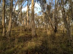 The Australian bush is a constant inspiration for our designs I the colour I the light I the beauty I aaahhhh!