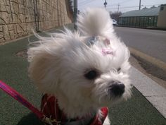 Wind in my hair...sweet! #puppy #animal #pet