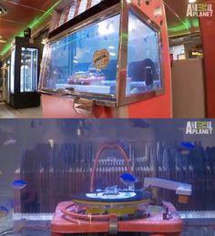 Jukebox Aquarium   10 Crazy And Outrageous Aquariums