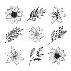 Vector - vector illustrations - floral set (flowers, leaves and branches). hand drawn design elements in sketch style. perfect for invitations, greeting Pencil Art Drawings, Art Drawings Sketches, Tattoo Drawings, Illustration Blume, Flower Sketches, Flower Drawings, Floral Drawing, Flower Doodles, Floral Illustrations
