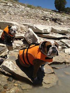 31459a008d2ed Puppy Kennel, Real Dog, Dog Beach, Animal Babies, Baby Animals, Fur