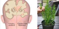 5 ervas que protegem contra Alzheimer, depressão e ansiedade! | Cura pela Natureza