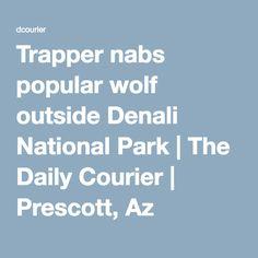 Trapper nabs popular wolf outside Denali National Park   The Daily Courier   Prescott, Az