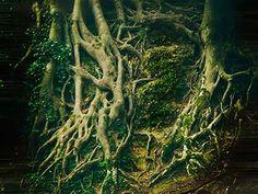 Mystischer Wald - mystic forest