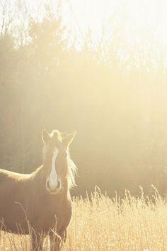 amazing shot! Love riding horses!