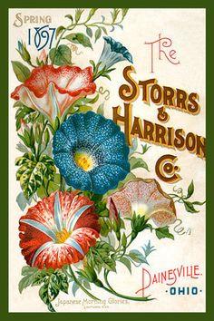 Olde America Antiques | Quilt Blocks | National Parks | Bozeman Montana : Flowers - Storrs and Harrison Co 1897