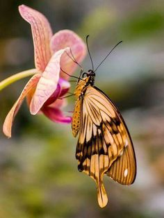 Nature's love of wings the butterfly