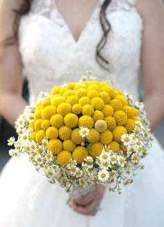 craspedia, daisy bouquet :) ahhh dreaming..