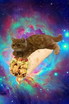 Burrito riding space cat ok @Emily Schoenfeld Schoenfeld Greso