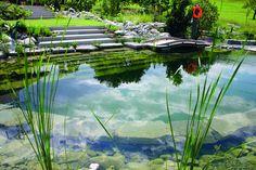 Building A Natural Swimming Pool   Natural pools