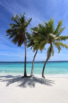 Tropical beach with palm trees Beach Pink, Sunny Beach, Best Beach In Florida, Florida Beaches, Iles Grenadines, Paradis Tropical, Famous Places In France, Sea And Ocean, Ocean Beach