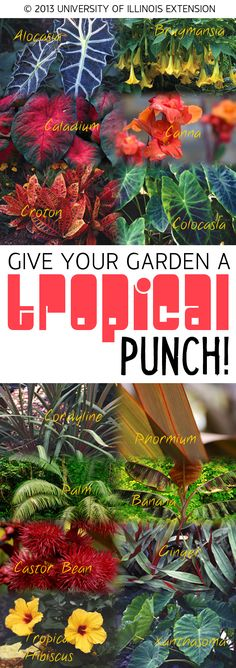 Learn how to give your garden a tropical punch!