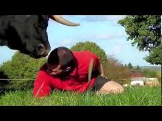 El verdadero caracter de un toro. No a las corridas de toros.