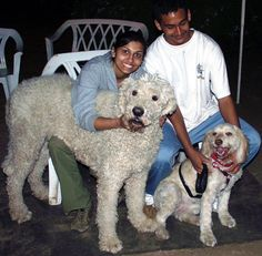 LOOK AT HOW BIG THAT POODLE IS