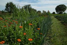 Grădina de la țară în 2016 Sun, Plant, Lawn And Garden