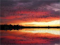 Poster Die Reise der Zugvögel in den Süden