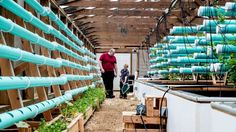 Aquaponics: An operation that farms with fish and plants — but no soil... Over the past year and a half, Patrick Durkin has been converting a former Manorville commercial fish farm into an aquaponics operation where fish and plants grow together. ... #Aquaponics #Hydroponics #Gardening #Design