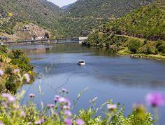 Alquiler de barcos para turismo fluvial / Aproache