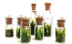 Grass wedding terrarium favors | Green Grass Wedding Reception Details For Spring
