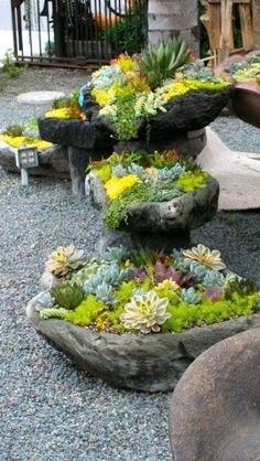 Abundance of succulents