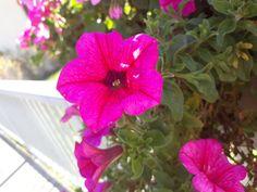 Plants, Pictures, Flora, Plant, Planting