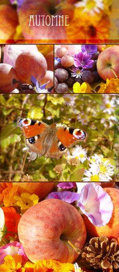 L'automne, sa faune, sa flore...