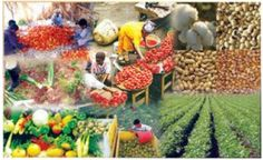 Agricultural Business in Nigeria: What you need to know