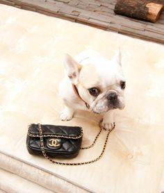 So sweet and yes that is a Chanel bag.  Hmm, filled with gourmet dog biscuits?