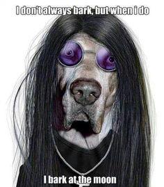 Metal dog!