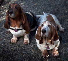 Ellie & Lola