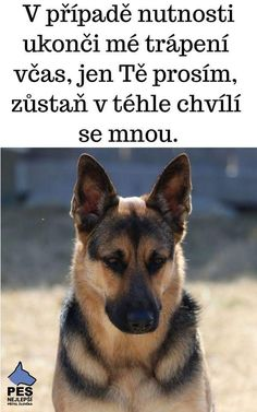 Motto, Cute Dogs, Texts, Motivation, Funny, Quotes, Animals, Life, Animal Pictures