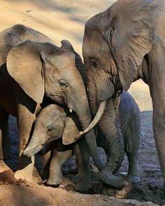 Elephant Family ❤