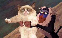 grumpy cat, lion king