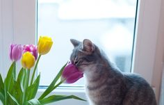 Some animals love the scent of flowers (10 photos) . - Album on Imgur
