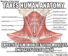 studying for anatomy memes - Google Search