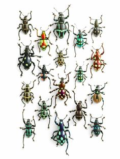 pheromone-design-christopher-marley-insects-series-1