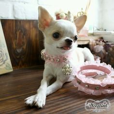 SWEET BABE Collar & Leash set in PINK