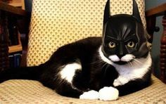 Bat... cat?